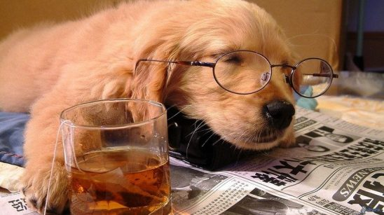 sleeping-dog-with-tea